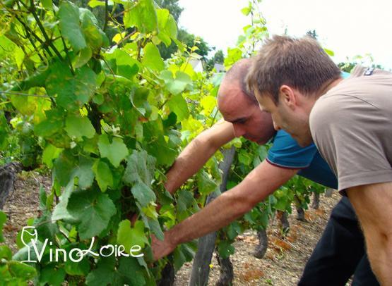 Vinoloire---Credits-Vincent-Delaby--19--3