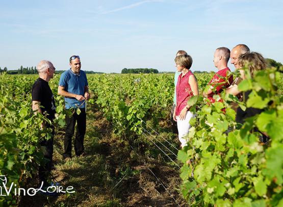 Vinoloire---Credits-Vincent-Delaby--2--3