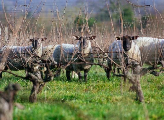 Mouton Clos Roussely