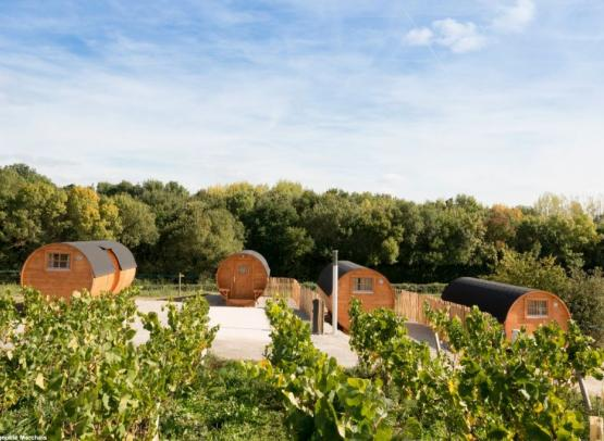 2018-tonneaux2-vignoble-Marchais-thouare-44-levignobledenantes-tourisme