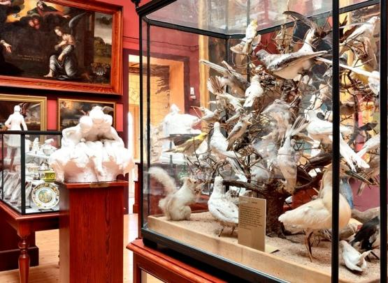 musée Joseph-Denais_salle des beaux-arts