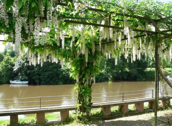 jardins-los-corrales-circuit-jardins-haie-fouassiere2