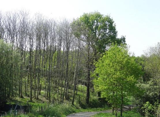 coulee-verte-la-chapelle-basse-mer-44-PNA (2)