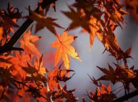 automne-pixabay-5