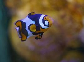 grand_aquarium_de_touraine (7)